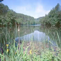 Woodchester Park, Stonehouse, Nympsfield, nr Stroud, Gloucestershire