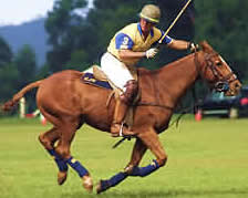 Polo in the Cotswolds